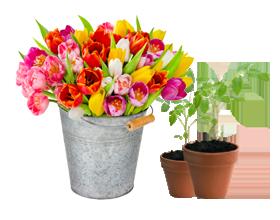 Anwendungsbereich Blumenmarkt Megaplast Verpackungsinnovation