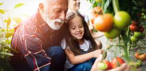 Großvater, der Bio-Gemüse mit Enkelkindern und Familie auf dem Bauernhof anbaut